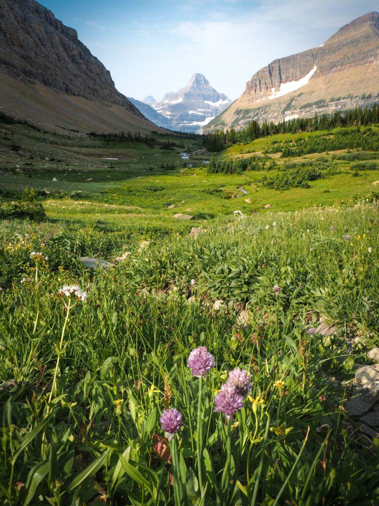 Summer Glacier National Park